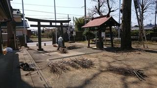 欅枝切り後(結束状況).JPG